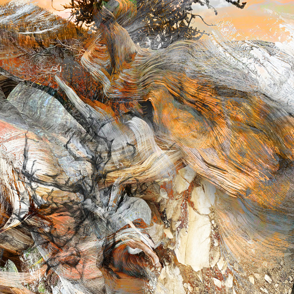 Sculpted by Time - the Tenacious Life of Bristlecone Pine 9
