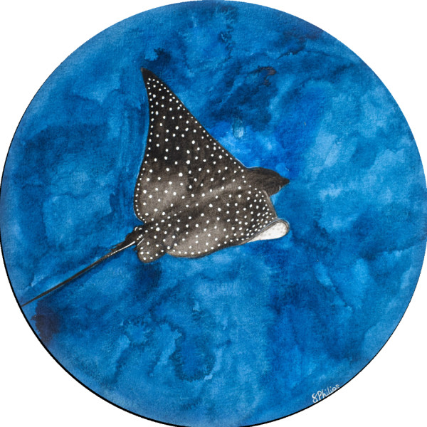 Spotted Eagle-Ray Study by Studio Philips