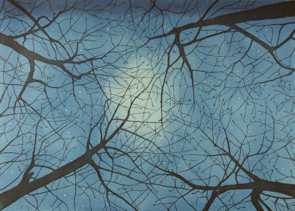 Awakening by Mara Cozzolino