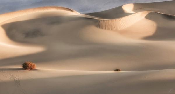 Mesquite Nude by Jill Sanders
