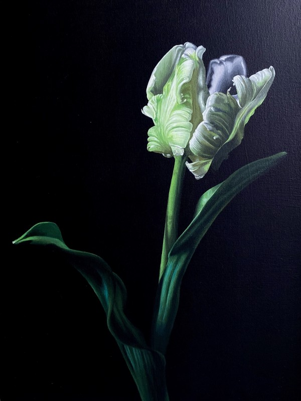 Polly wants a Tulip by Jo Kreyl