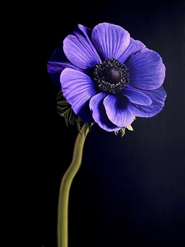 Winsome Windflower by Jo Kreyl