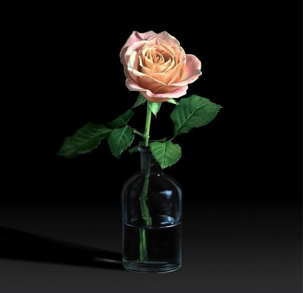 Rose in lab bottle by Jo Kreyl