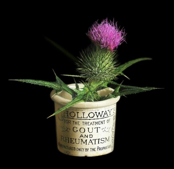 Arthritis is a prickly wee beastie by Jo Kreyl