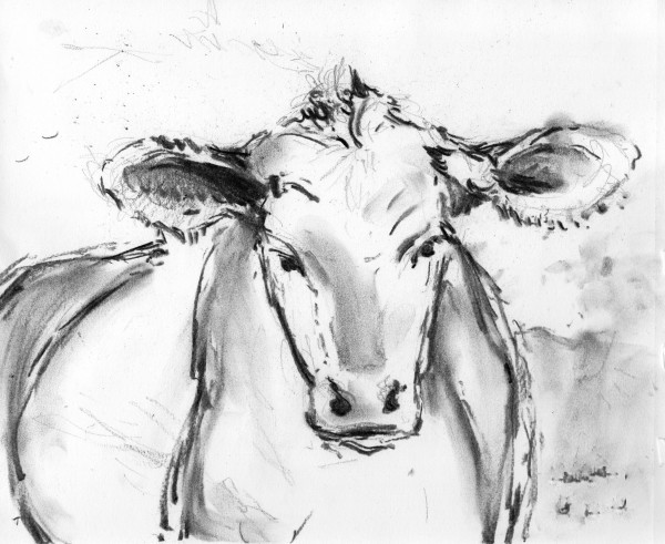 Cow by Laurie Maher
