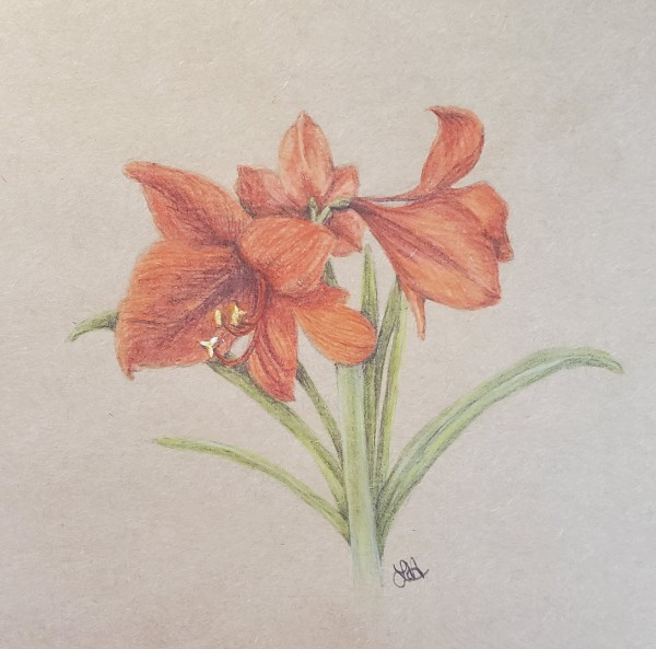Amaryllis by Laura Sue Hartline