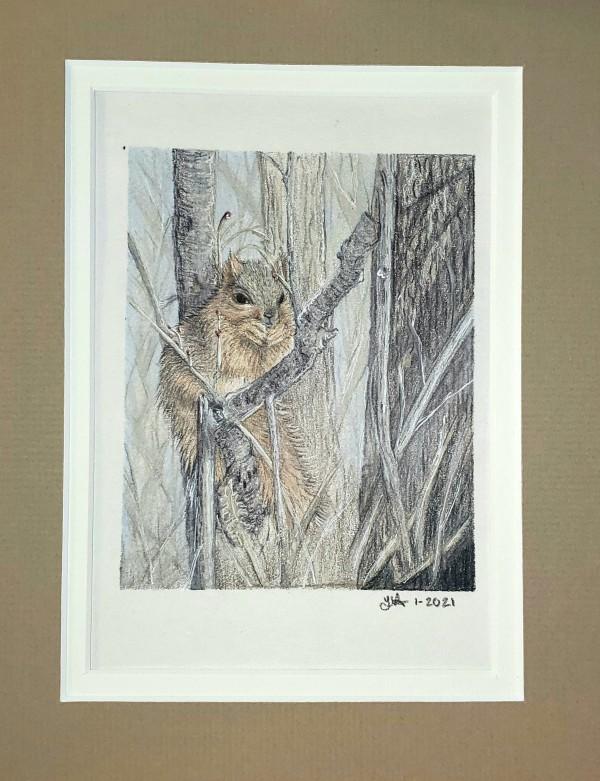 Luvina's Squirrel by Laura Sue Hartline