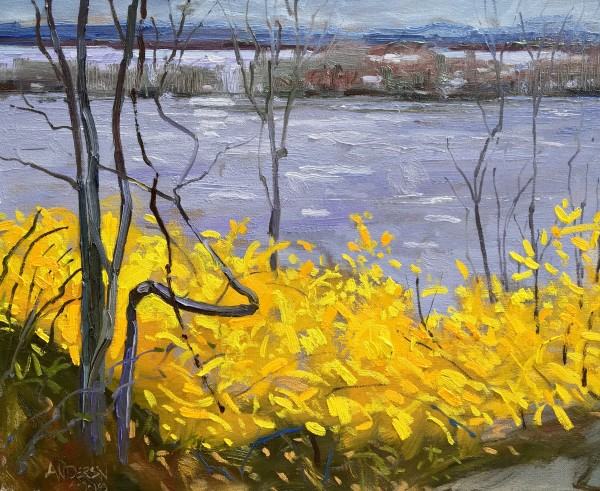 Forsythia In Bloom, River In Flood by Michael Anderson