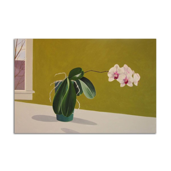 Orchids by Jane Troup