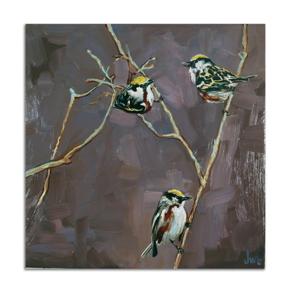 Warblers by Jared Gillett
