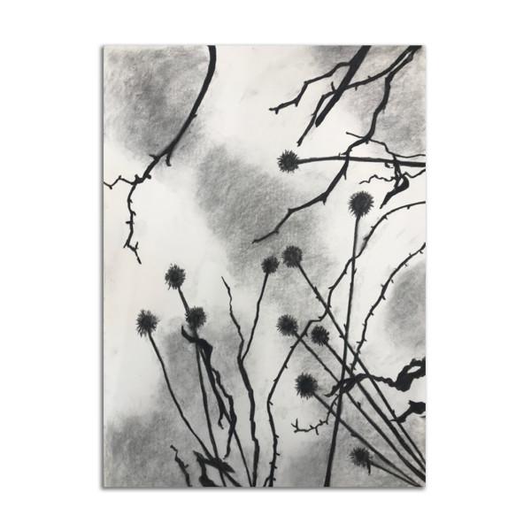 Winter Garden Coneflower by Lil Olive