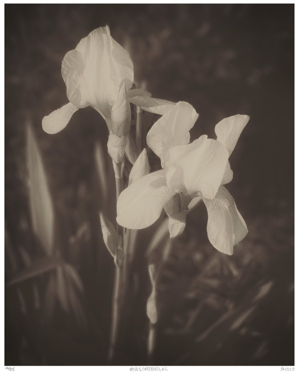 14. Irises, Carrboro, NC by Jenn Adams