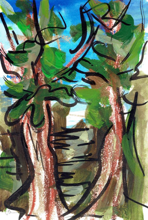 Redwoods XV by Sonya Kleshik