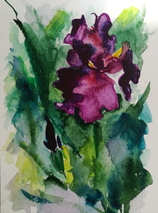 Blooming Iris in Garden by Sonya Kleshik