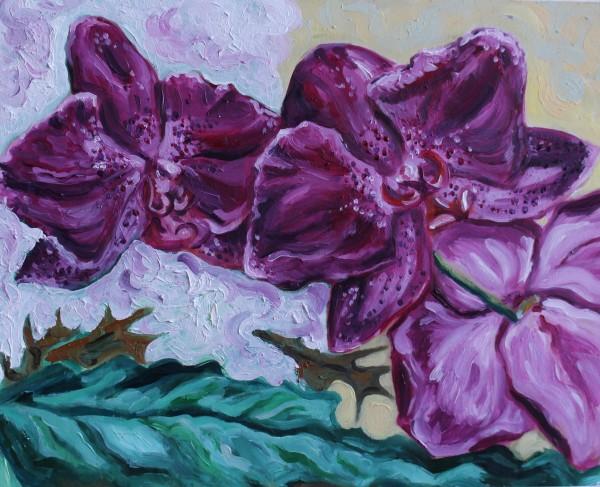 Orchids by Sonya Kleshik