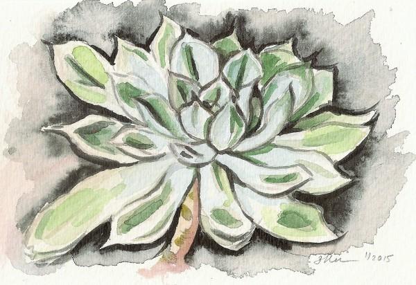 Echeveria Succulent by Sonya Kleshik