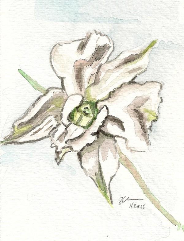 White Orchid by Sonya Kleshik