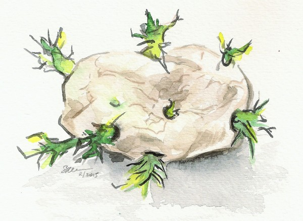 Sprouting Potato by Sonya Kleshik