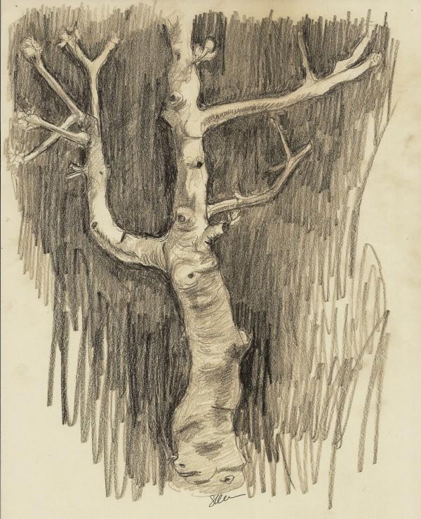 Fig Tree II by Sonya Kleshik