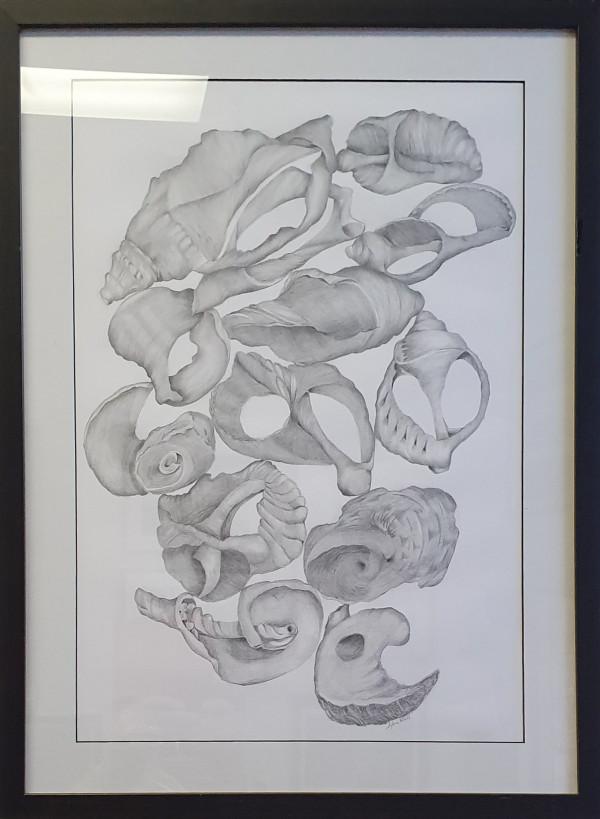Shells by Sylvia Wall