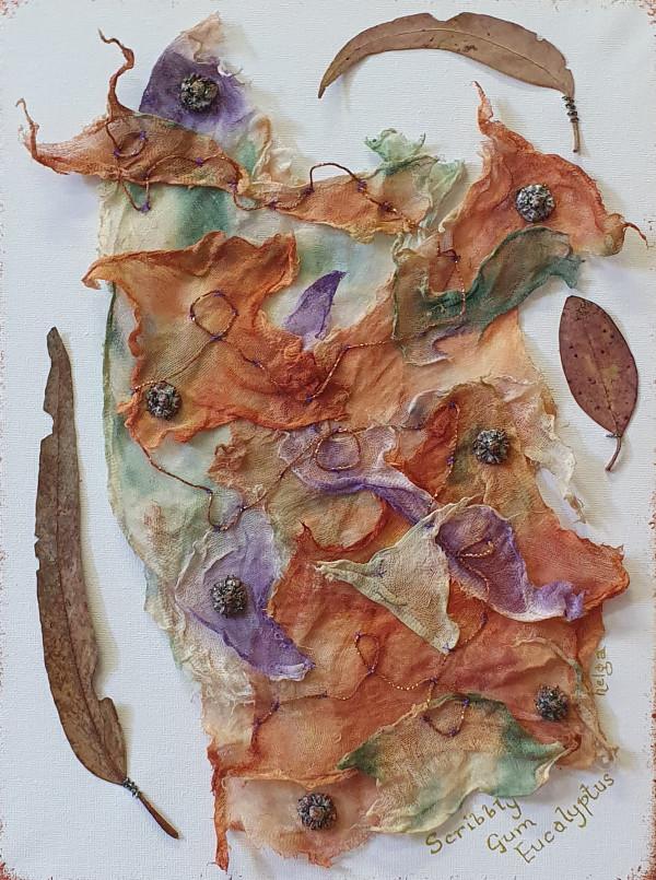 Scribbly Gum Eucalyptus by Helga Hague