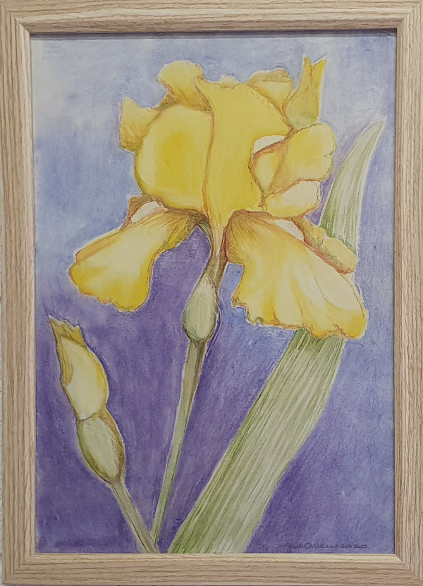 Iris by Jan Owens