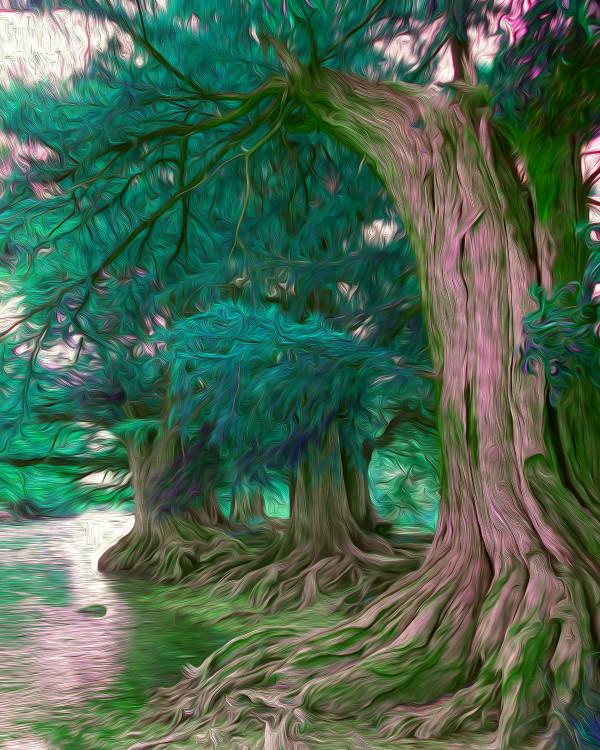 Medina River Fun by Nancy J. Wood