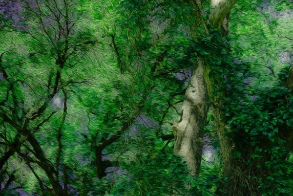 Forest Breeze by Nancy J. Wood