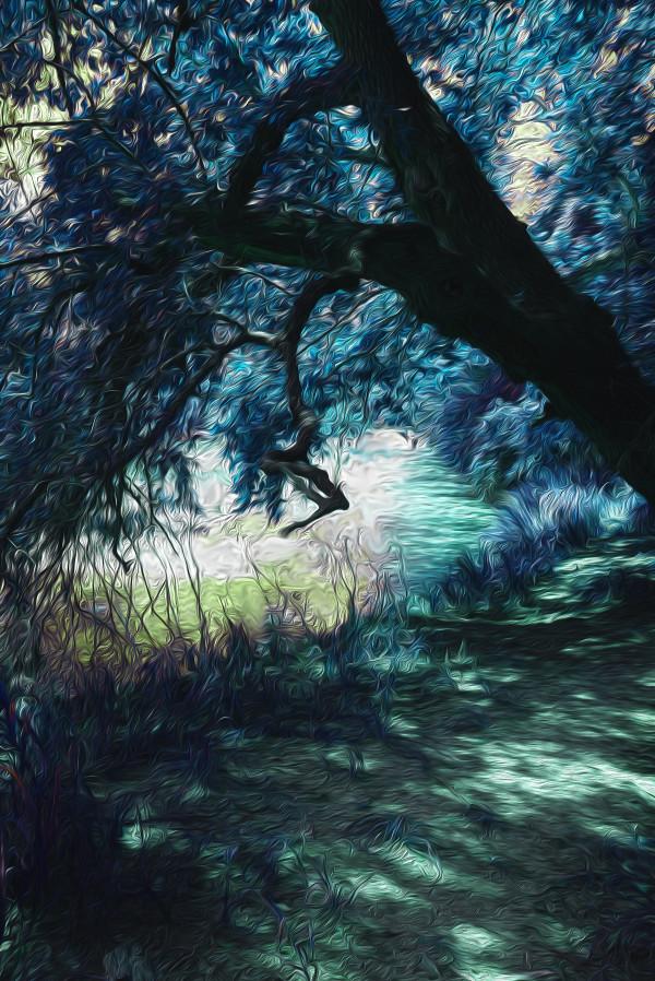 Tree Over Water by Nancy J. Wood