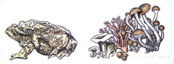 Two Toads Together and Toadstools by Jonas Ropponen