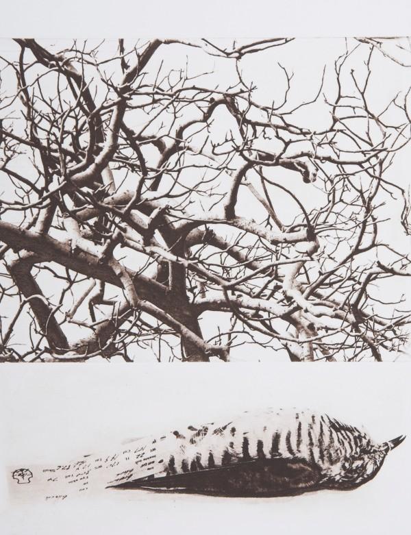 Birdwood by Christine Willcocks