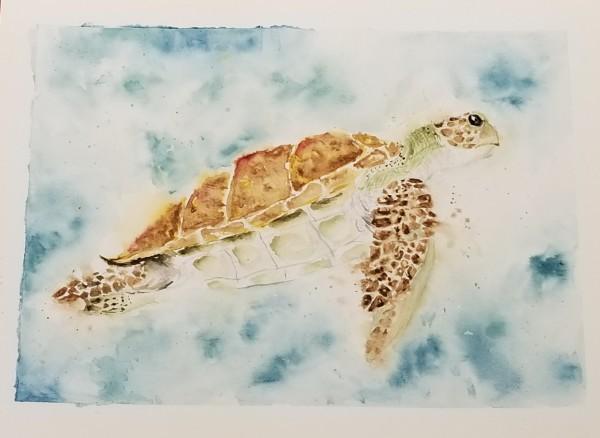 Turtle by Brennan Flach
