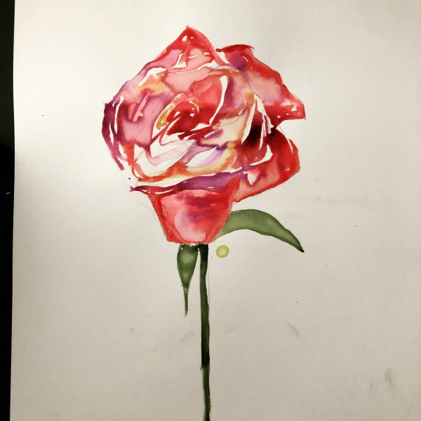 The Rose by Claire Necessary