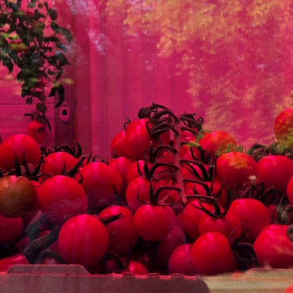 Guggenheim Tomatoes by Susan Grucci
