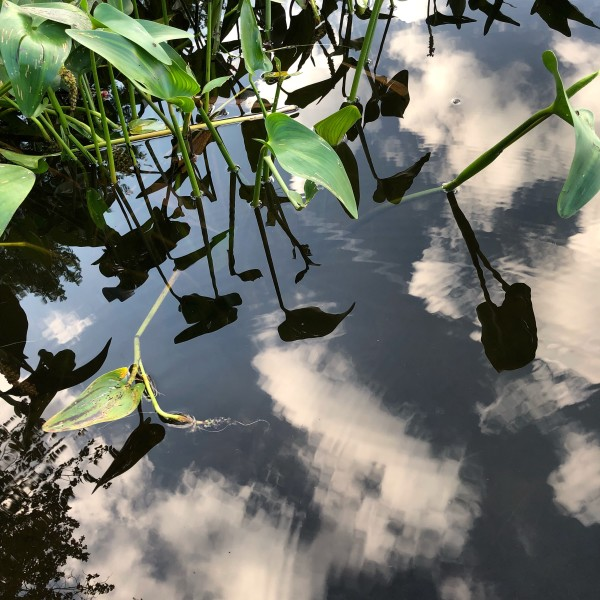 Lily pads and clouds by Susan Grucci