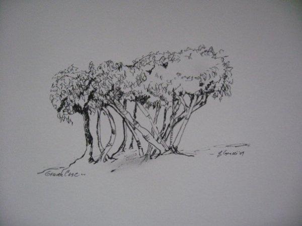 Pen & Ink by Susan Grucci