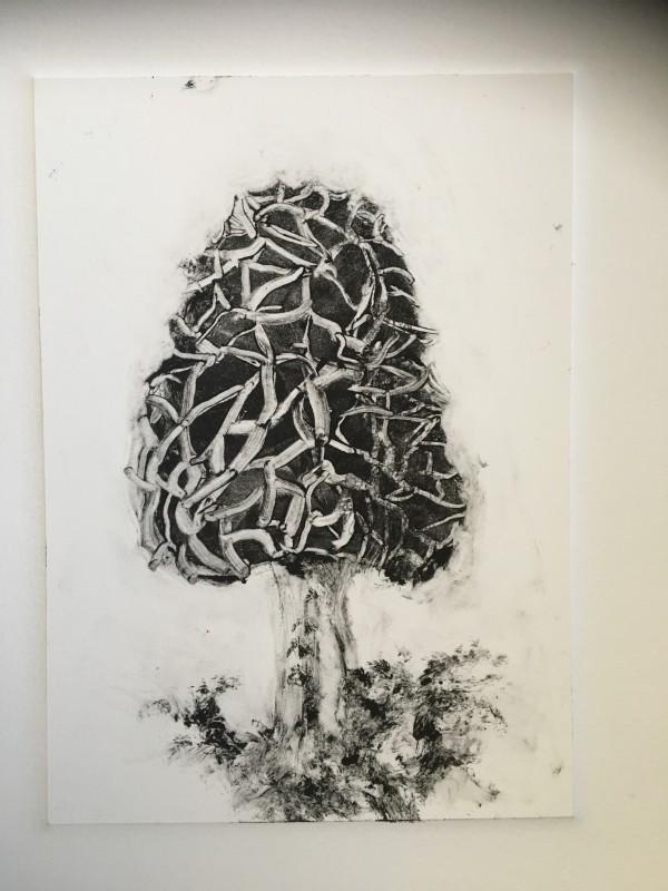 """""""Morel"""" by Susan Grucci"""