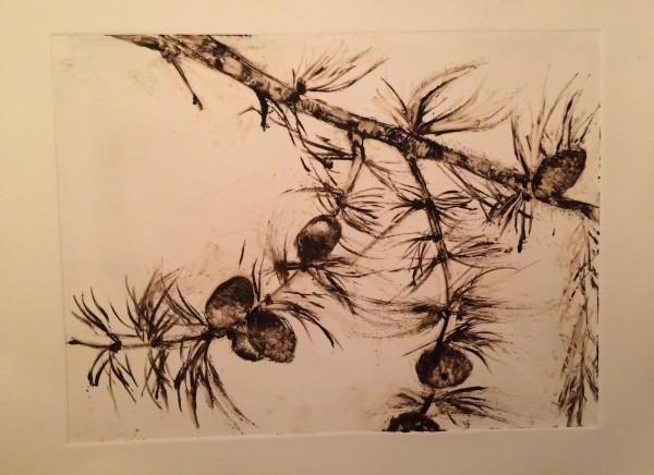 Pine branch by Susan Grucci
