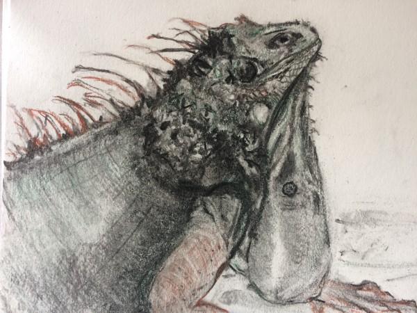 Caribbean  Iguana by Susan Grucci