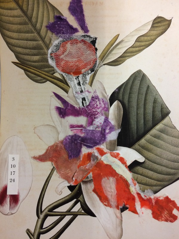 Botanical mix by Susan Grucci