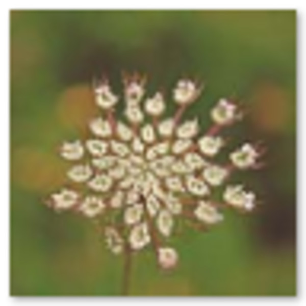 Desert Flowers by Alaina Chapin