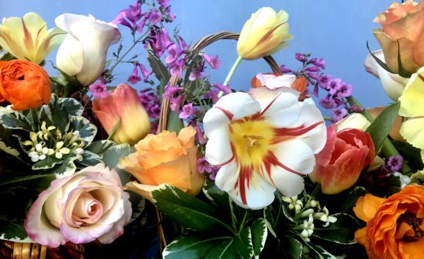 Parrot Tulips and Pittosporum Herald Spring! by Cita Scott