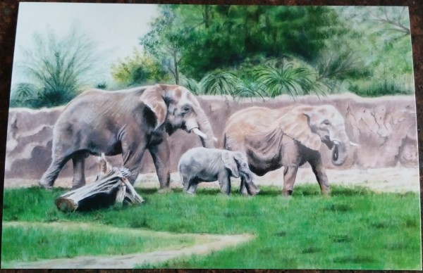 Nandi and Her Family by Dorothy Maxson