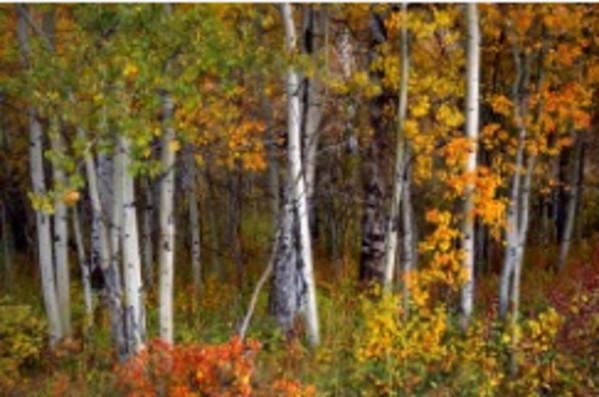 Fall's Peaceful Beauty by Susan Drew