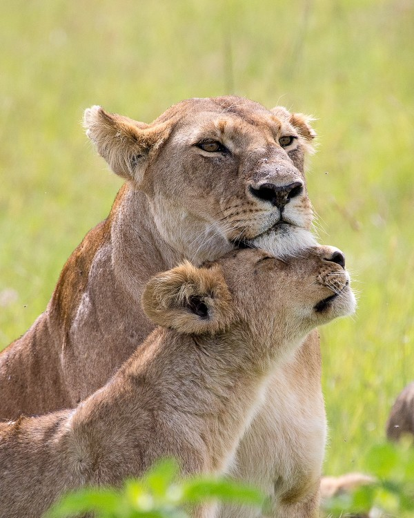Mother's Love, East Africa by Larry Haas