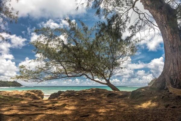 Kauai 1 by Larry Hanelin