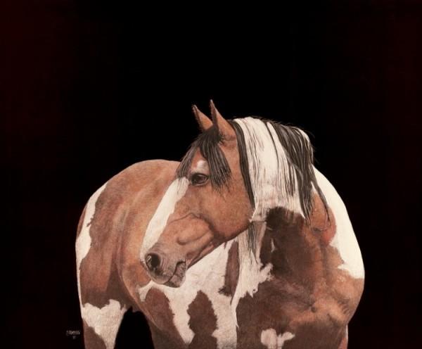 Picasso II (Colorado Mustang) by Paul Hopman