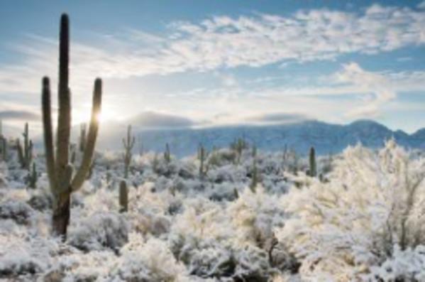 Sunrise, Sonoran Desert by John Miranda