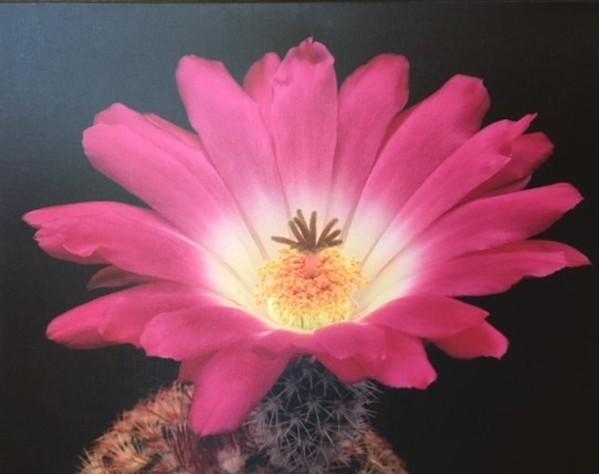 Desert Bloom by John P. Schaefer