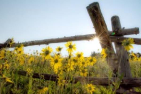 Near Crested Butte by Kathy Krucker